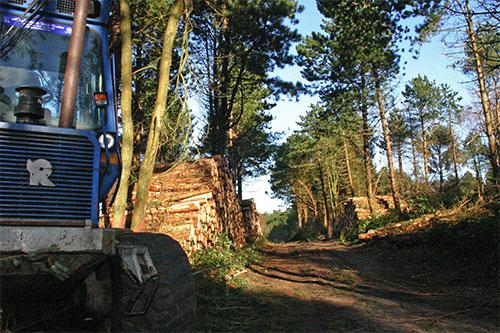 steenodderwald4