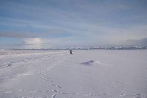 Blick auf die Nordspitze (pl)