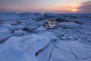 Der nahrhafte Spülsaum unter Eisschollen begraben