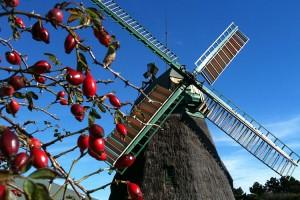 Die Mühle streckt ihre Flügel Richtung Sonnenstrahlen...