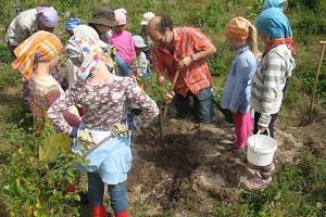 Christoph Mossmann pflanzt mit den bütjen jongen einen Speierling