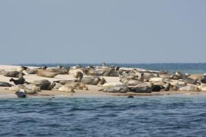 Sonnenbaden auf einer Sandbank