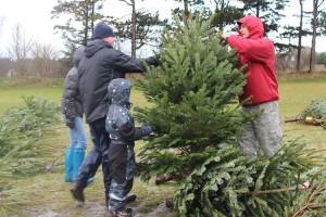 Weihnachtsbaumverkauf und Weihnachtsmarkt am Sportplatz