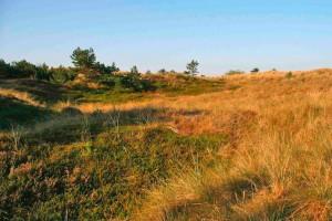 Wald, Heide und Dünen - schön anzusehen aber gefährliche Mischung...
