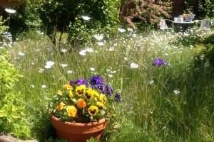 Blumen, Bäume und Gräser konnten eine Dusche von oben gut gebrauchen...