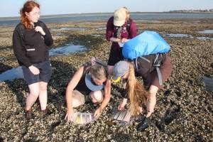 Monitoring des Wattenmeeres unerlässlich...