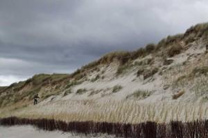 Neue Halmpflanzungen werden nördlich von Norddorf angelegt