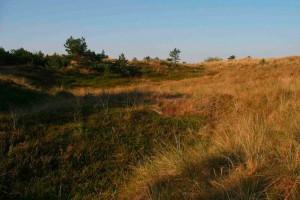 Dünen- und Heideflächen sind sehr trocken