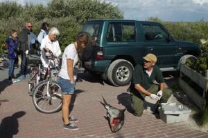 Der Amrumer Seehundjäger Kai Michael Prellwitz-Paulsen untersucht das Tier und informiert Besucher