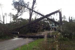 Bäume brachen im Minutentakt...