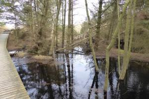 Auch die angrenzenden Bereiche leiden unter dem Hochwasser