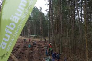 Aufgebäumt: Das Bergwaldprojekt auf Amrum