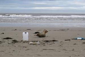 Müll am und im Meer: eine Gefahr für die Umwelt und den Menschen