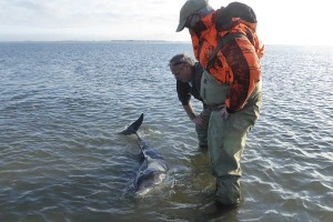 Der Delfin lässt sich nicht von den Seehundjägern Kai-Michael Prellwitz-Paulsen und Holger Lewerentz beeindrucken.