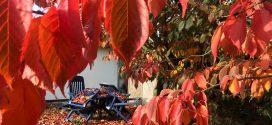Zwischen Spätsommer und Herbst…