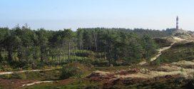 Der Amrumer Wald …