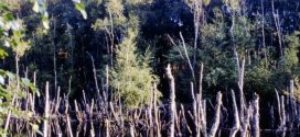 Urwald in der Vogelkoje