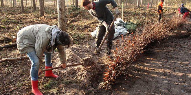 Gemeinsam im Einsatz für einen stabilen Inselwald −  das Bergwaldprojekt e.V. mit fast 80 Freiwilligen auf  Amrum …